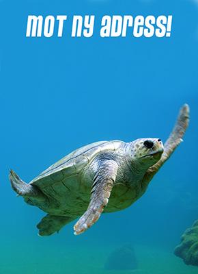 En sköldpadda som simmar i blått vatten med texten: mot ny adress.